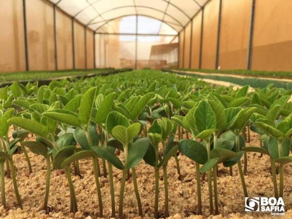 Boa Safra Sementes (SOJA3) informa mudança acionária boa safra sementes (soja3) informa mudança acionária Boa Safra Sementes (SOJA3) informa mudança acionária boa safra sementes gbsa3 e1617925051187