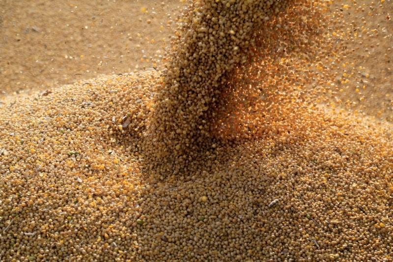 Agribrasil (GRAO3) protocola pedido de IPO agribrasil Agribrasil (GRAO3) protocola pedido de IPO agribrasil ipo